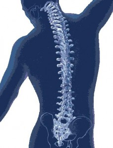 Clapham Osteopath treats Back Pain